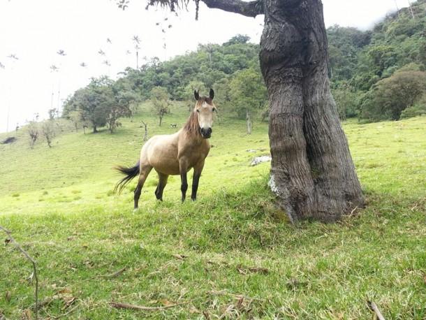 Horse-Salento