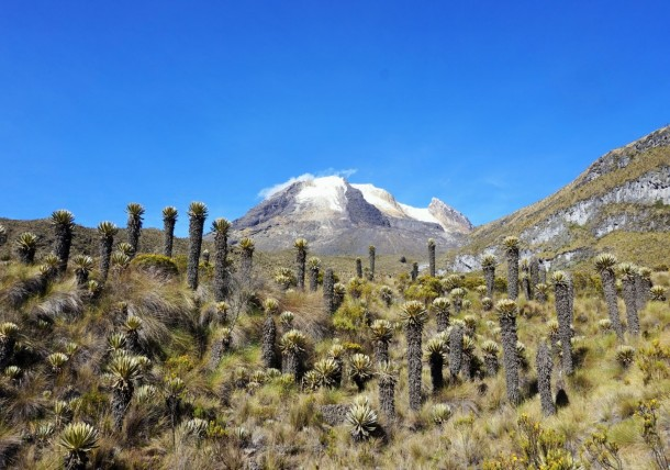 thumbnail_nevado-del-tolima-and-frailejon-horizontal